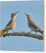 Northern Flickers Communicate Wood Print