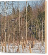 Northern Forests Ghost In-flight Wood Print