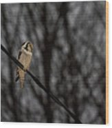 Northern Hawk-owl 22 Wood Print