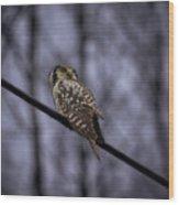 Northern Hawk-owl 6 Wood Print