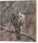 Northern Hawk Owl Having Lunch 9416 Wood Print