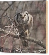 Northern Hawk Owl Having Lunch 9417 Wood Print
