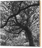 Northern Ireland 37 Wood Print