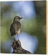 Northern Mockingbird At Quarry Lake Wood Print