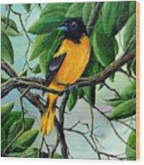 Northern Oriole Wood Print by David G Paul