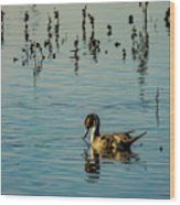 Northern Pintail At The Wetlands Wood Print