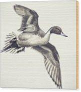 Northern-pintail Wood Print