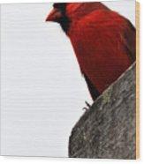 Northern Red Cardinal Wood Print