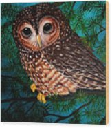 Northern Spotted Owl Wood Print