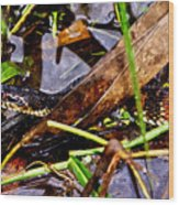 Northern Water Snake Wood Print