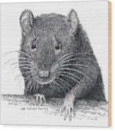 Norway Rat Wood Print