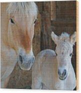 Norwegian Fjord Horse And Colt 1 Wood Print