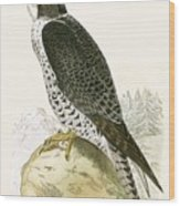 Norwegian Jer Falcon Wood Print