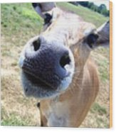 Nosey Cow Wood Print