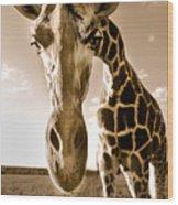 Nosey Giraffe Wood Print