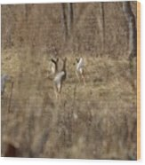 Nothing But White Tails Wood Print