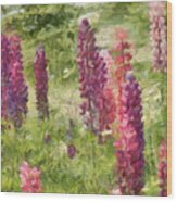 Nova Scotia Lupine Flowers Wood Print