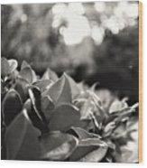 Novato Wood Print