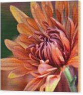 November Beauty Wood Print