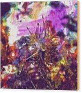 Nudibranch Flabellina Slug Seaslug  Wood Print