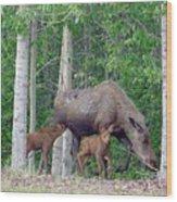 Nursing Moose Wood Print