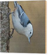 Nuthatch In Profile Wood Print