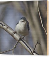 Nuthatch On Perch Wood Print