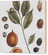 Nutmeg, 1735 Wood Print