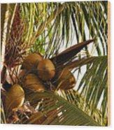 Nuts On Tree  Wood Print