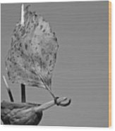 nutshell sailboat BW Wood Print