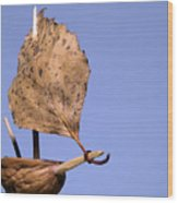 Nutshell Sailboat Wood Print