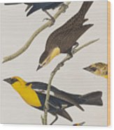 Nuttall's Starling Yellow-headed Troopial Bullock's Oriole Wood Print