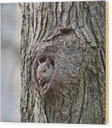 Nutty Squirrel Surprise  Wood Print