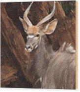 Nyala Wood Print