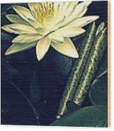 Nymphaea Wood Print