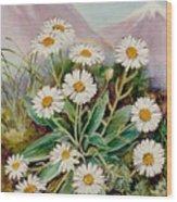 Nz Mountain Daisy Wood Print