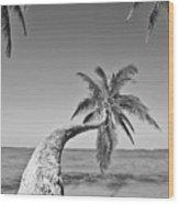 Oahu Palms Wood Print by Tomas del Amo - Printscapes
