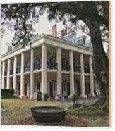 Oak Alley Plantation Wood Print by Perry Webster