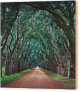 Oak Alley Road Wood Print by Perry Webster