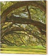 Oak Alley Tunnel Of Oaks Wood Print