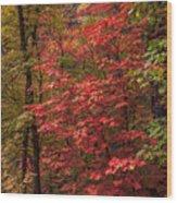 Oak Creek 3 Wood Print