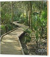Oak Hammock Trail, Florida Wood Print