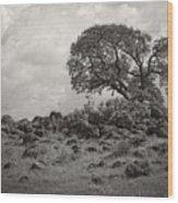 Oak In Rock Field Wood Print