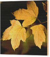 Oak Leaf Trio Wood Print