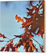 Oak Leaves 2 Wood Print