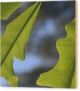 Oak Leaves Abstract Designed By Nature Wood Print