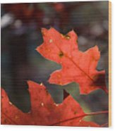 Oak Leaves Aglow Wood Print