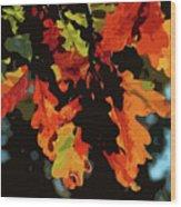 Oak Leaves In Autumn Wood Print