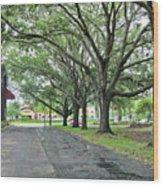 Oak Lined Drive Wood Print