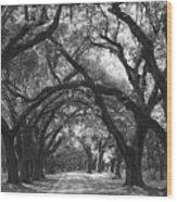Oak Lined Drive Way, Coastal, South Carolina  Wood Print